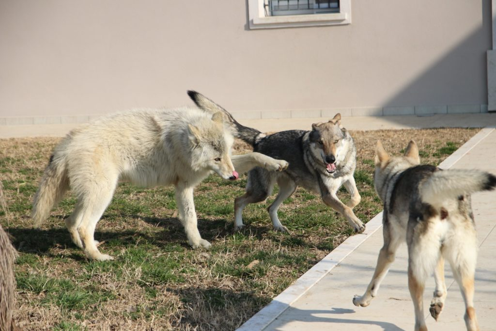 A Corte Tosoni potrete portare il vostro cane in asilo giornaliero dove si divertirà con dei nuovi amici!