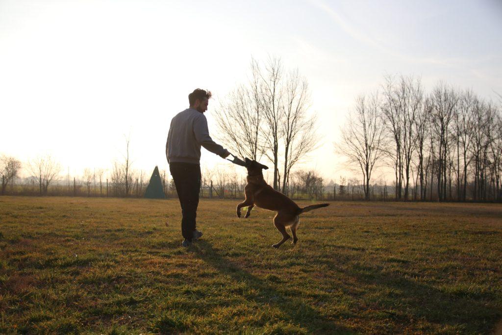 A Corte Tosoni puoi fare sport entusiasmanti con il tuo cane!