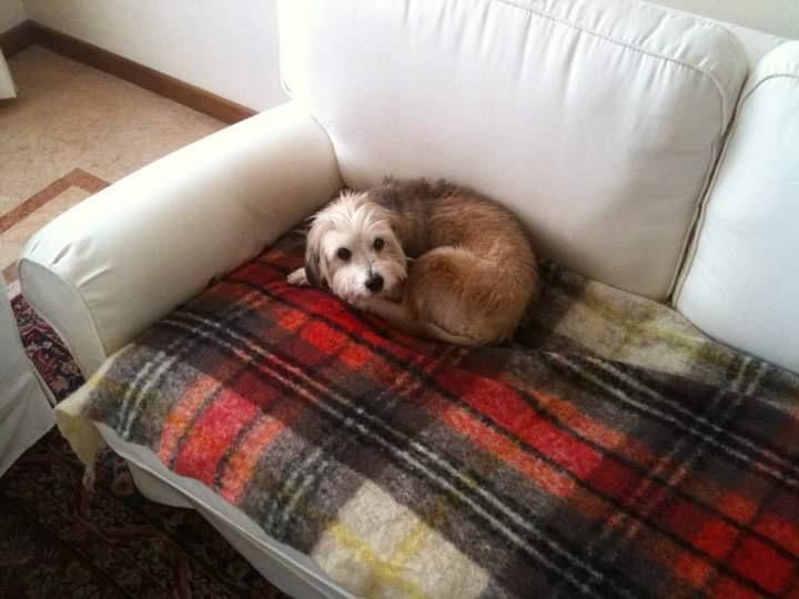 Milli: il mio primo cane